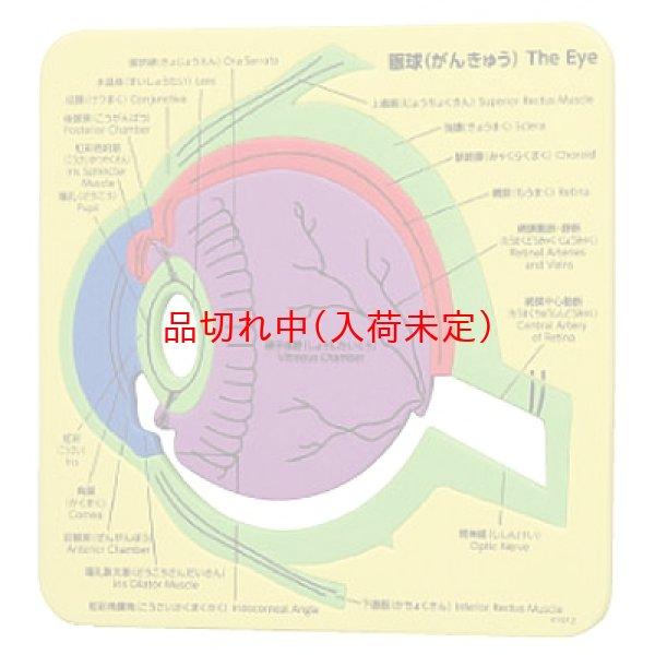画像1: 教材景品 眼球の構造パズル (1)